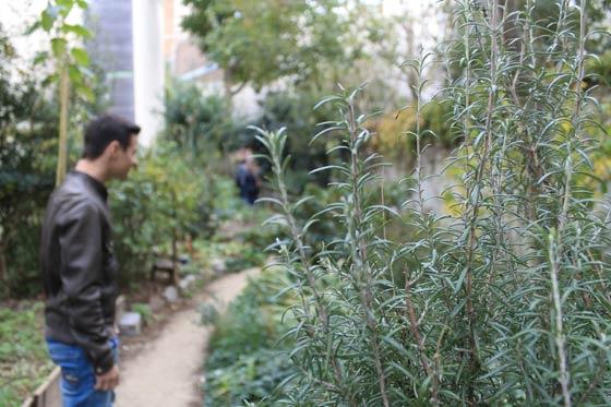 Plantes aromatiques au jardin des soupirs